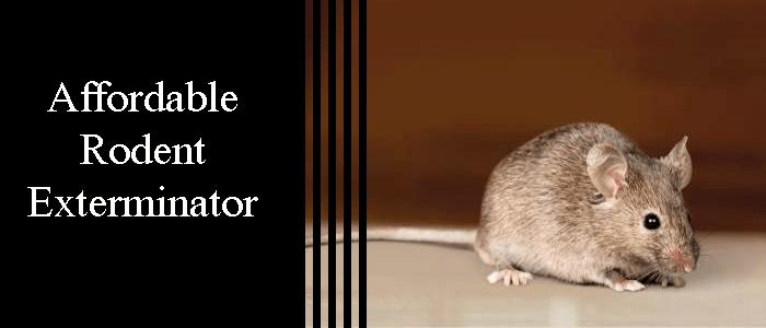 Affordable Rodent Exterminators