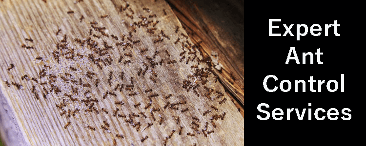 Expert Ant Control Services